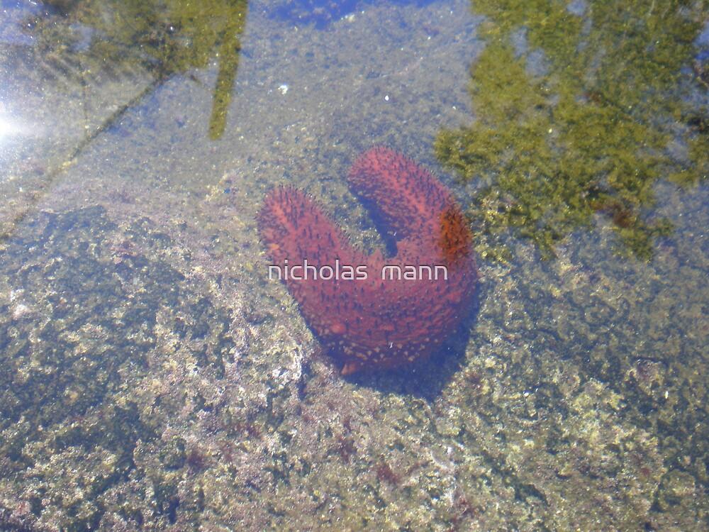 sea slug by nicholas  mann