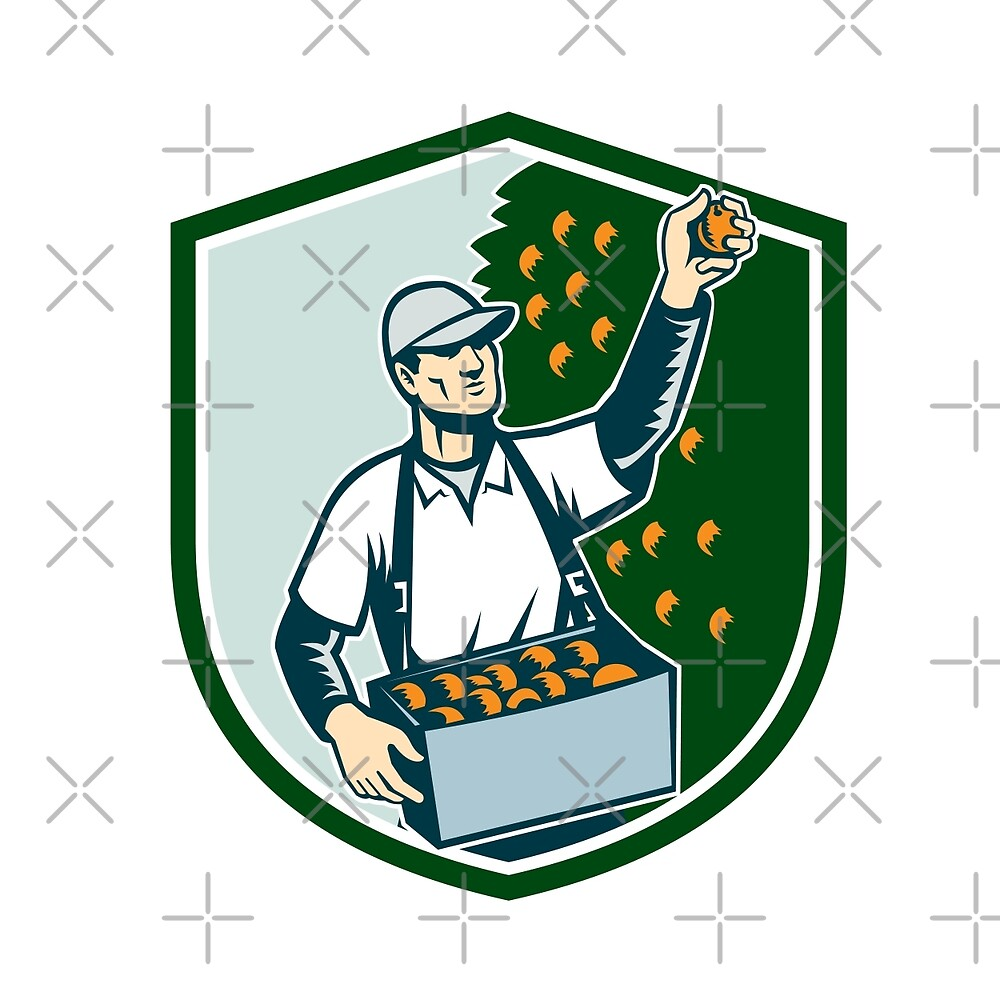 Fruit Picker Worker Picking Plum Shield by patrimonio