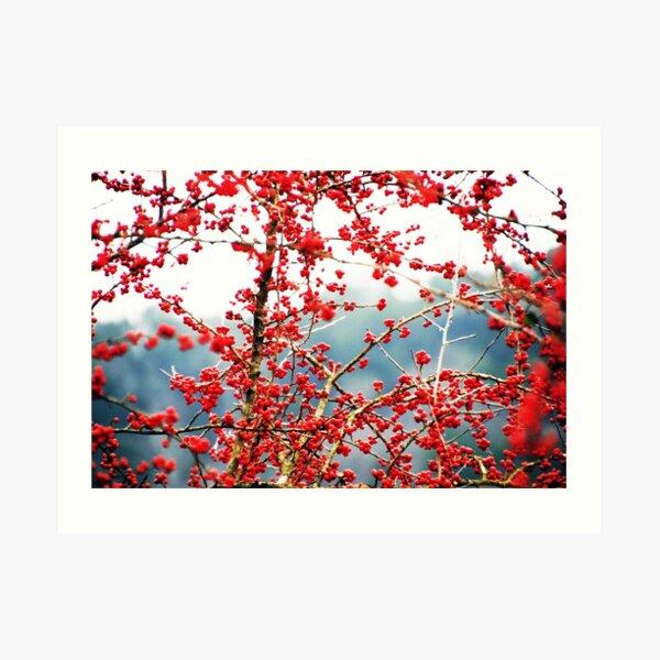 Austin Hawthorn Tree Art Print