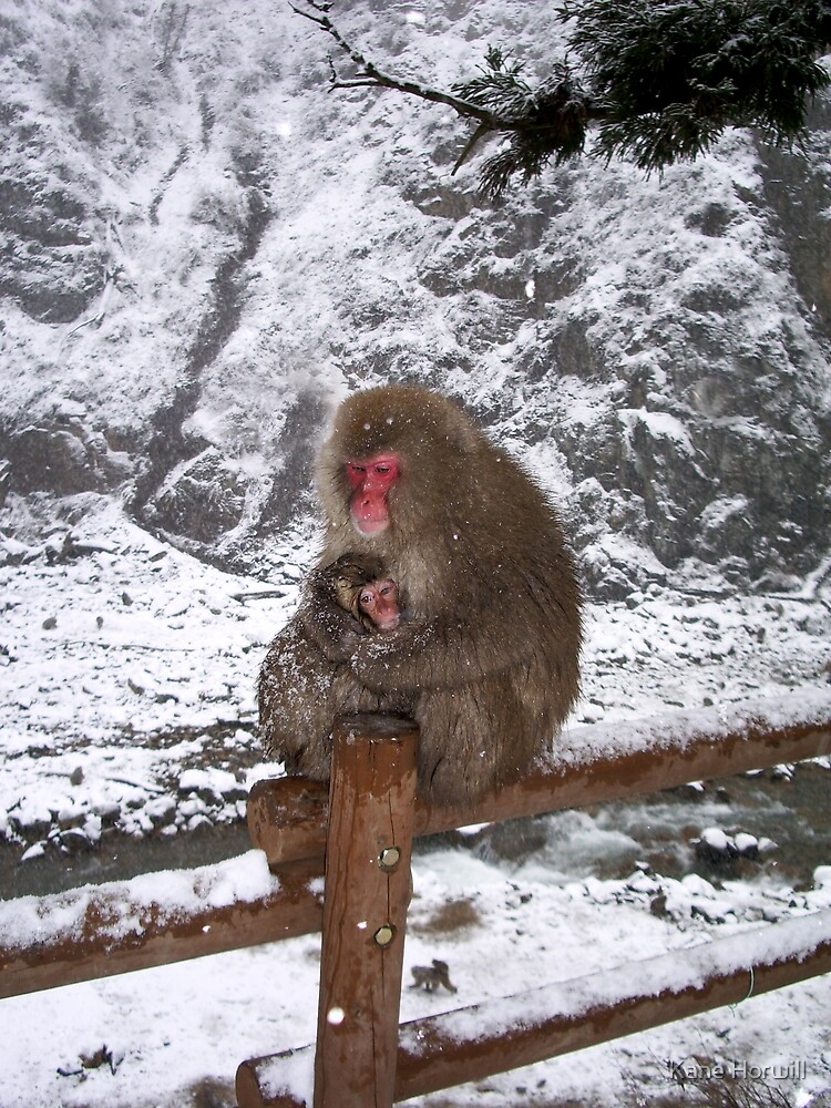 who's looking after you - Nagano (Japanese Snow Monkey (Nihon Zaru)) hot springs forest, Japan by Kane Horwill