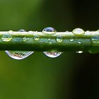 Droplets by Heather Friedman