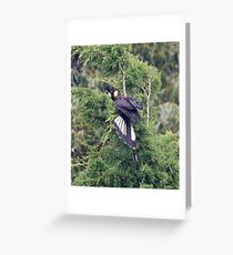 PARROT ~ Yellow-tailed black Cockatoo by David Irwin Greeting Card