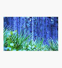Azure Photographic Print
