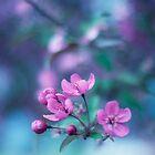 The bloom by Angela King-Jones