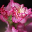 Beautiful Gladiolus Flower Petals  by Joy Watson