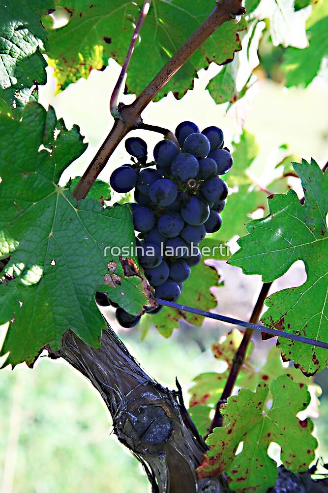 Cedar Creek Vines by Rosina  Lamberti