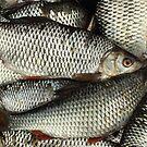Live fish full basket by mrivserg