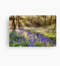 Bluebells woodland path with glowing sunrise light Canvas Print