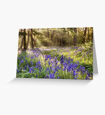 Bluebells woodland path with glowing sunrise light Greeting Card