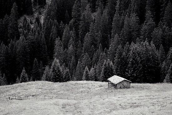BEYOND FIRS by Daniel Coulmann