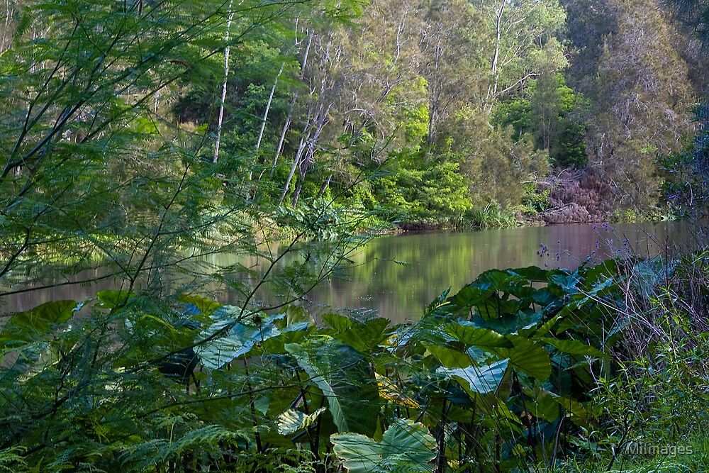 Lane Cove River National Park by MiImages