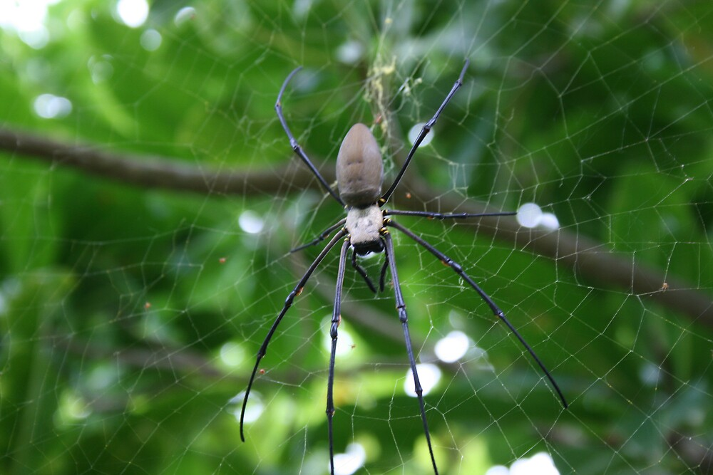 Long legged Spider by XFiLeS