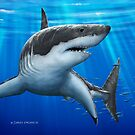Blue Predator - Great White Shark by David Pearce