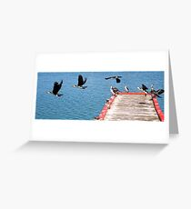 Birds of Lakes Entrance Greeting Card