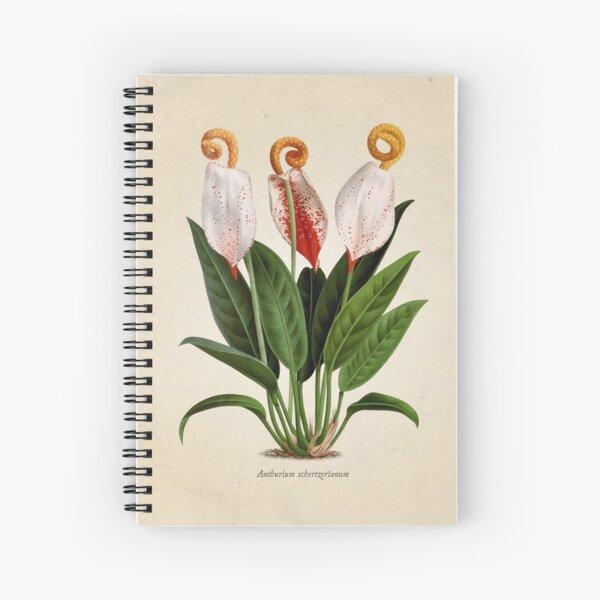 Anthurium scherzerianum old plate Cuaderno de espiral