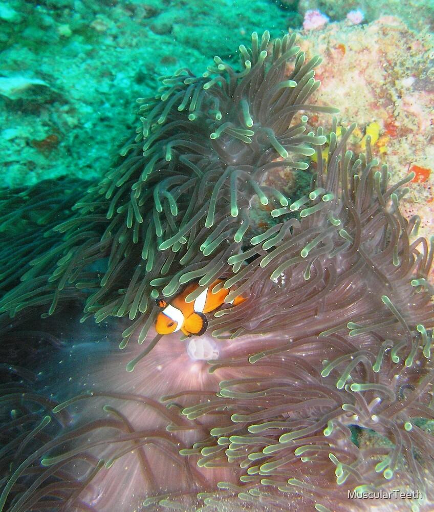clown fish by MuscularTeeth
