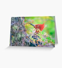 Woodpecker at Forest Pecking Tree, Patagonia, Argentina Greeting Card