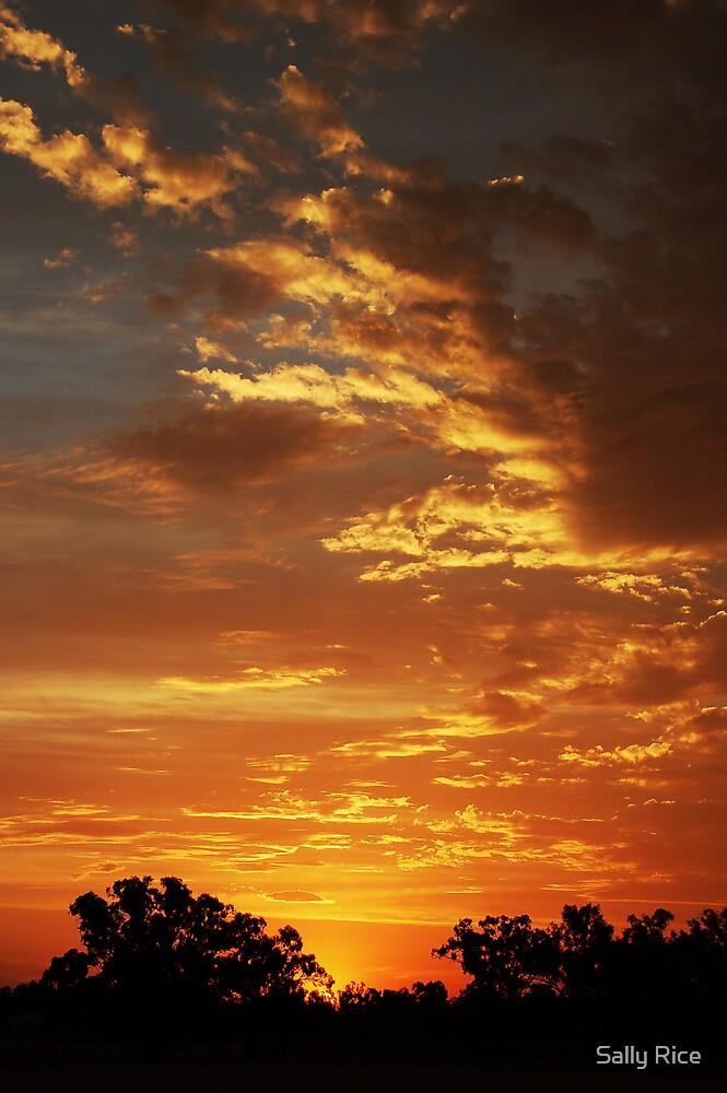 Sunset on the Farm by Sally Rice