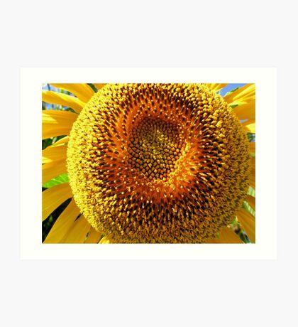 Fat Sunflower Art Print