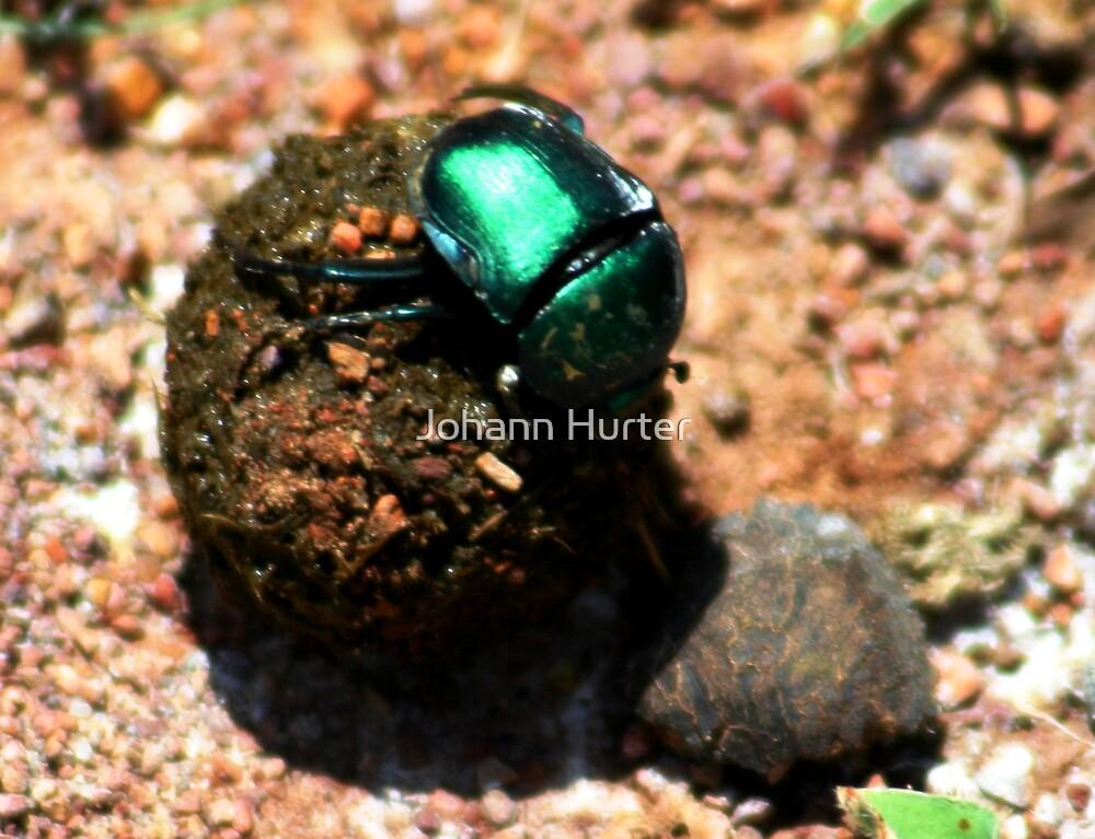 Dung Beetle by Johann Hurter