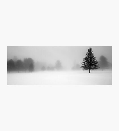 Bridgton Highlands - Trees In Fog and Snow Photographic Print