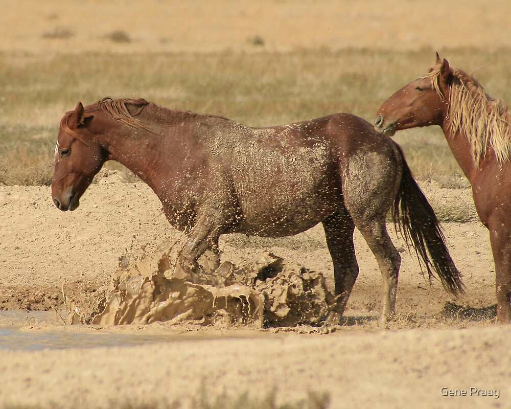 Cooling Off The Wild Way by Gene Praag