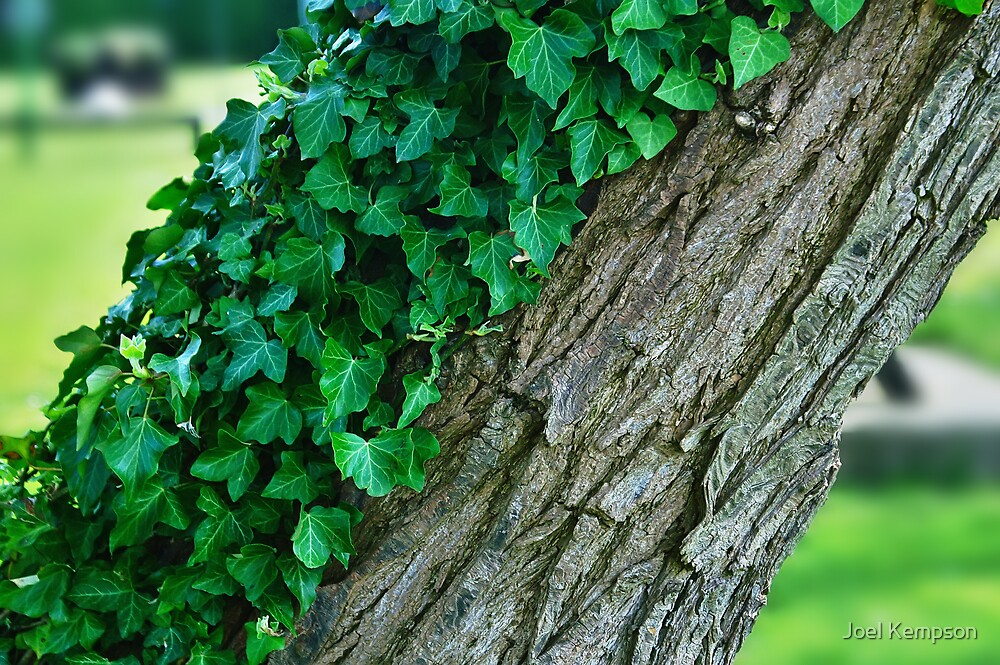 A Tree Half Covered In Ivy With Blurred Background by Joel Kempson
