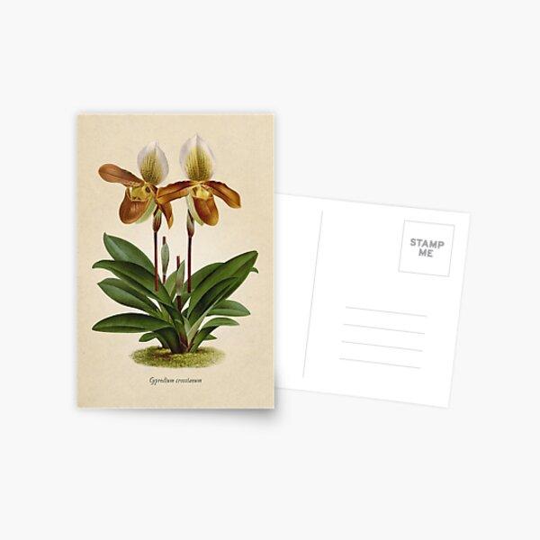 Cyripedium crossianum old plate Postal