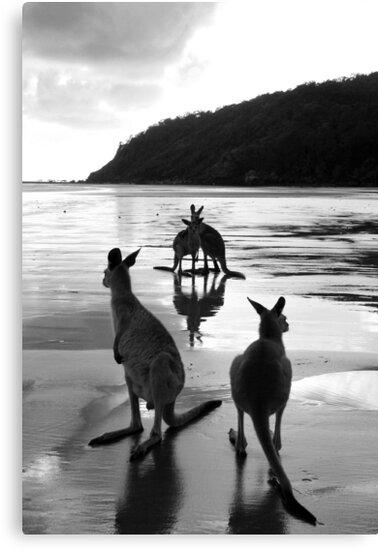Kangaroos at Sunrise by Victoria Ashman