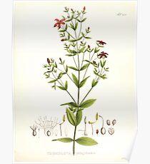 Nova genera et species plantarum V1 V3 Plates Karl Friedrich Philipp von Martius 1834 254 Poster