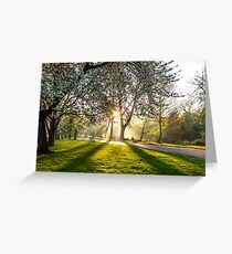Sun rays through the blossom. Greeting Card