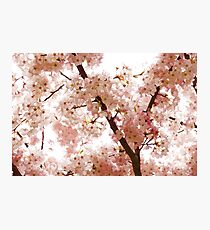 Pink Cherry Blossoms - Impressions Of Spring Photographic Print
