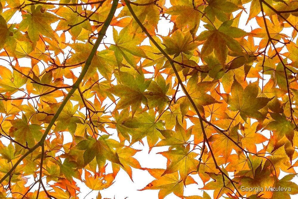 Under the Japanese Maple - Impressions Of Fall by Georgia Mizuleva
