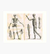 Illustration d'anatomie du XIXe siècle Parties d'un squelette humain Impression artistique