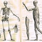 19th century anatomy illustration parts of  a human skeleton by artfromthepast