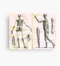 19th century anatomy illustration parts of  a human skeleton Canvas Print