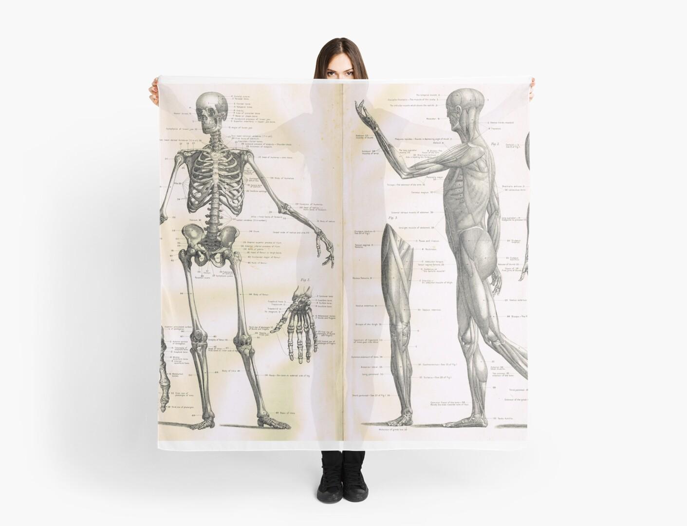 19th Century Anatomy Illustration Parts Of A Human Skeleton Scarves