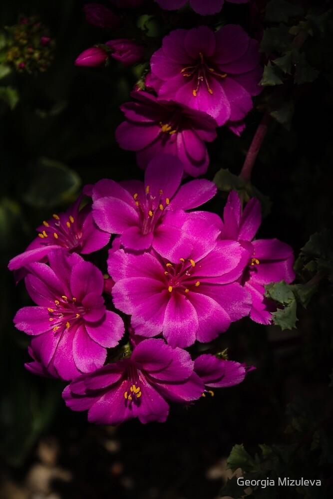 A Vivid Succulent Bouquet in Bold Pink and Fuchsia by Georgia Mizuleva