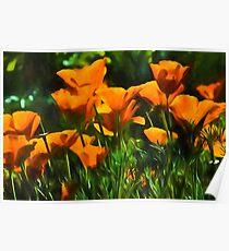 Brilliant Orange California Poppies - Impressions of Desert Spring Poster