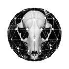 geometric raccoon skull by Roger Porter
