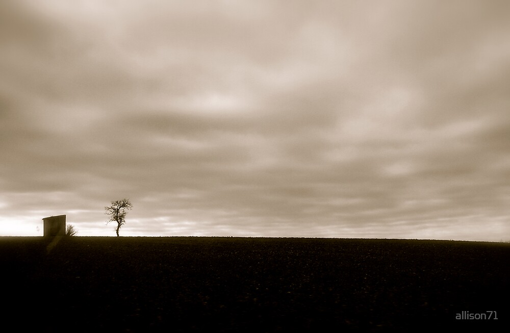 lonely tree by allison71