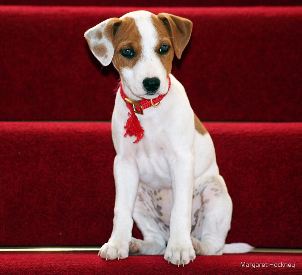 Ruby - looking innocent. by Margaret Hockney