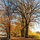 Autumn in Dolina Baryczy by Dominika Aniola