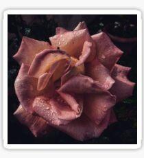 Rose drops Sticker