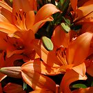 Lillies by Barbara Caffell