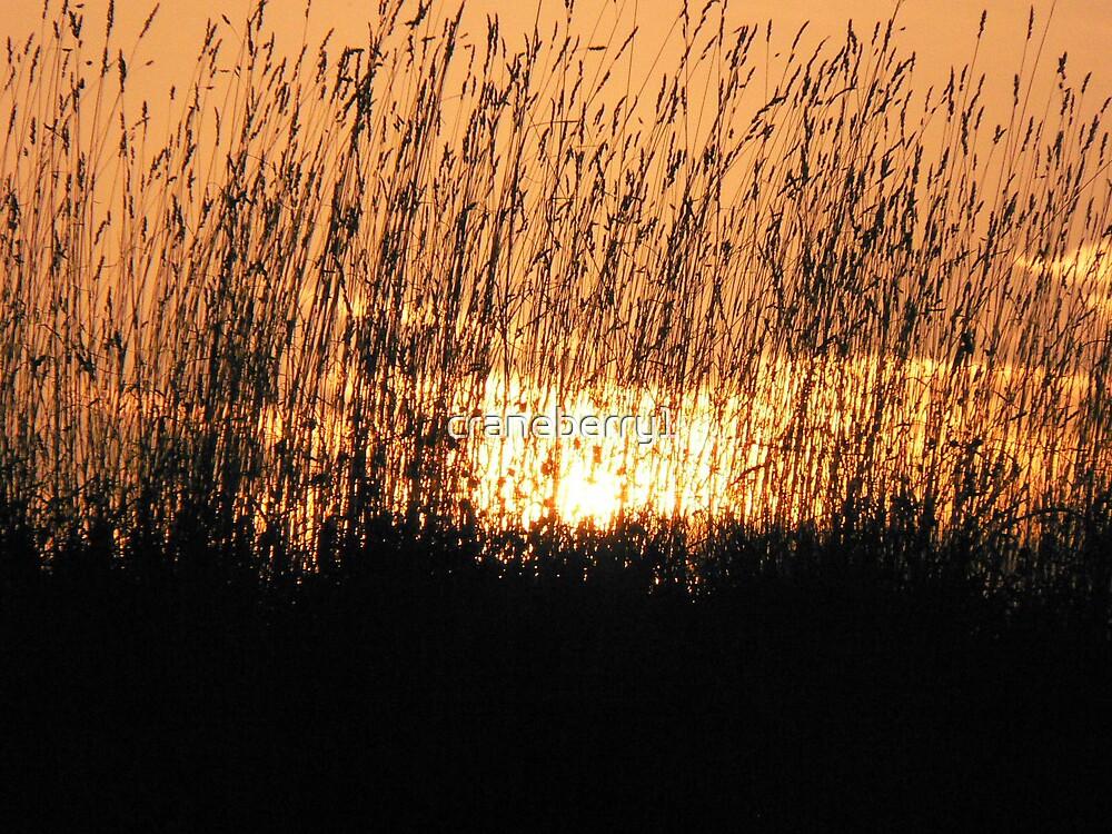 fall grass by craneberry1