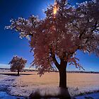In the pink by Mark Bangert