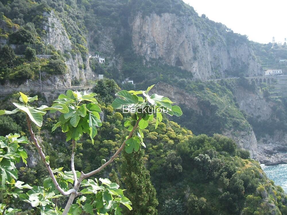 Amalfi Fig Tree by Beckylou
