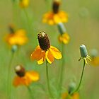 Mexican Hat Dance by Bill Morgenstern