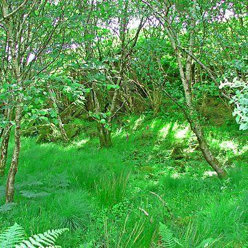 Woodland by Szeghalmi